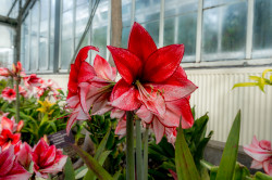 Lily_Allans_Gardens